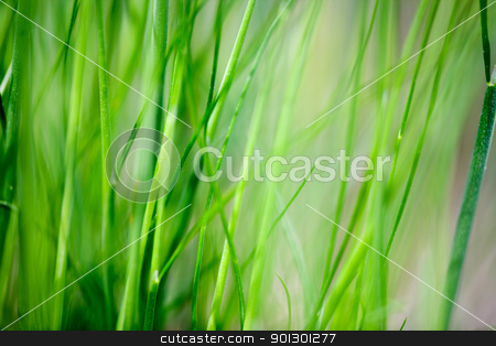 Grass Background stock photo, An abstract grass background with light motion blur on some of the blades by Tyler Olson