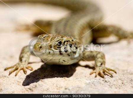 Lizard stock photo, Macro of a lizard by Tyler Olson