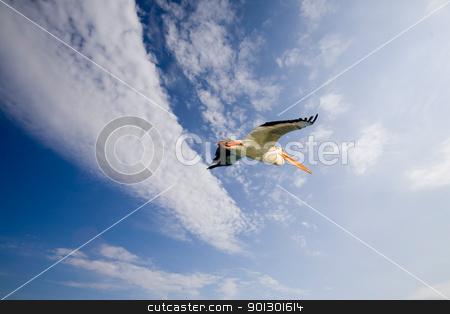Pelican in Flight stock photo, A pelican bird in flight by Tyler Olson