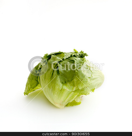 Lettuce on White stock photo, A typical head of lettuce isolated on white by Tyler Olson