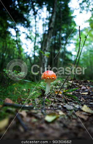 Magic Mushroom stock photo, A magic mushroom in the forest - fly Amanita by Tyler Olson