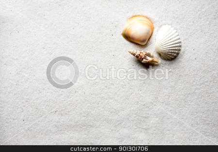 Sand Shell Background stock photo, A shell on a background of golden warm sand by Tyler Olson
