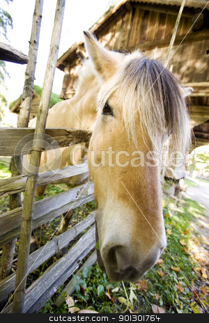 Hose Close Up stock photo, A close up image of a horse in Norway by Tyler Olson