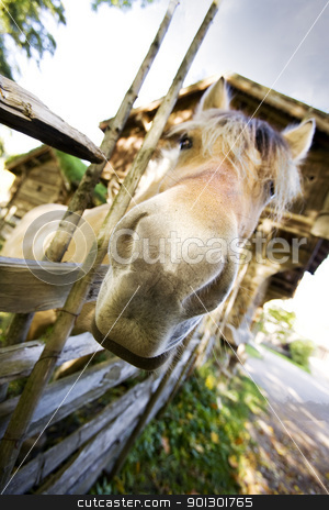 staring Horse stock photo, A close up of a horse with focus on the nose by Tyler Olson