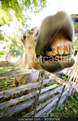 Crazy Horse stock photo, A crazy horse with motion blur to add to the craziness :) by Tyler Olson