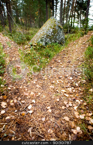 Path Split stock photo, A path is split in the forest with two options by Tyler Olson