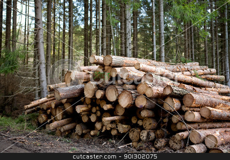 Forestry stock photo, A pile of logs recently harvested by Tyler Olson