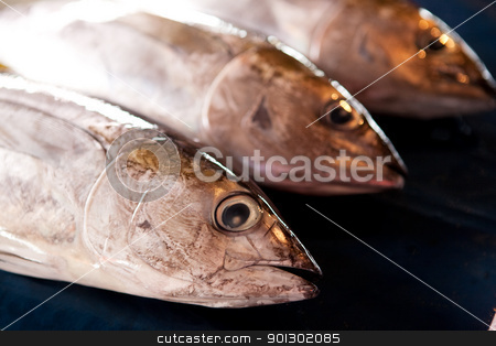 Fresh Fish stock photo, Three fresh fish at an outdoor market by Tyler Olson