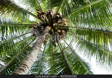 Palm Tree Background stock photo, A background abstract of a palm tree by Tyler Olson
