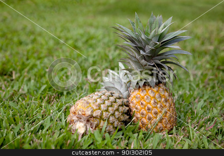 Pineapple stock photo, Two freshly picked pineapples in grass by Tyler Olson