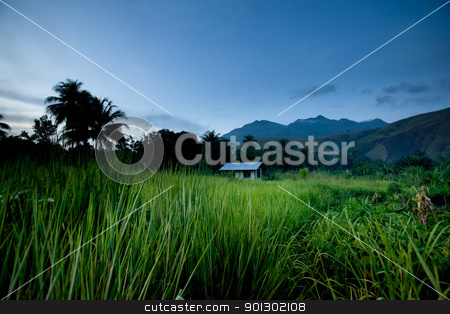 Tropical Mountain Hut stock photo, A mountain hut in the tropics - papua indonesia by Tyler Olson