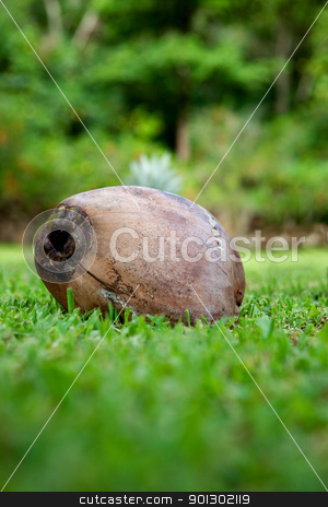 Coconut stock photo, A coconut fallen on the grass by Tyler Olson