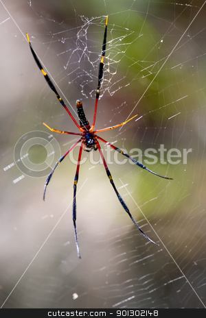 Large Spider in Web stock photo, A large black and yellow spider waiting in it's nest by Tyler Olson