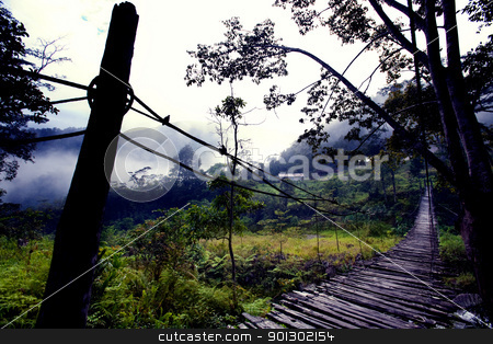 Hanging Bridge Fear stock photo, A scary hanging bridge in a tropical landscape by Tyler Olson