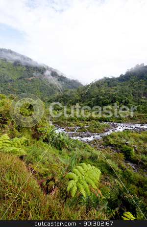 Mountain Stream with Fog stock photo, A stream winds through tropical mountains by Tyler Olson