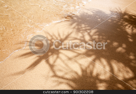 Tropical Background stock photo, Palm tree shadow, sand and water - warm and relaxing by Tyler Olson