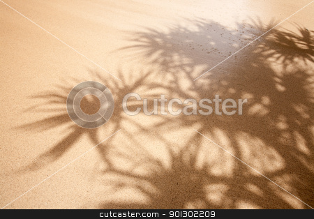 Wet Sand Background stock photo, Tropical background with palm trees and wet sand by Tyler Olson