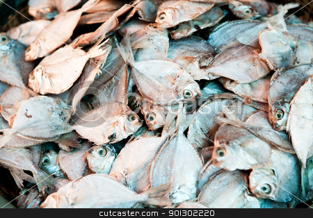 Dried Fish Background stock photo, A background of dried white fish by Tyler Olson