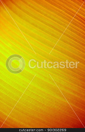 Large Leaf Abstract stock photo, A very large tropical leaf texture background by Tyler Olson