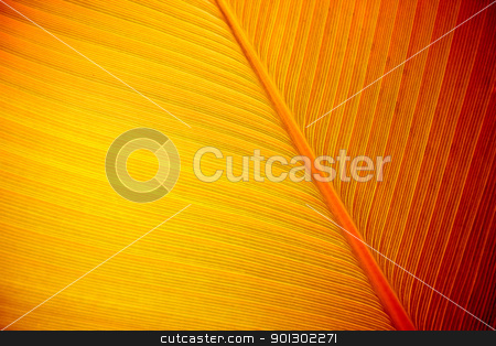 Large Leaf Background stock photo, Large tropical leaf background. by Tyler Olson