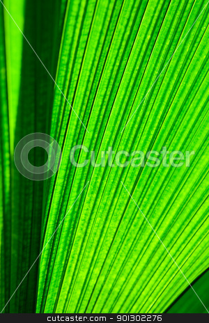 Leaf Texture stock photo, A very large tropical leaf texture background by Tyler Olson