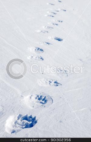 Polar Bear Tracks stock photo, Fresh polar bear tracks - Spitsbergen, Svalbard, Norway by Tyler Olson