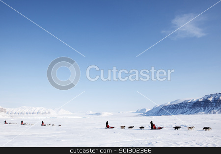Dog Sled stock photo, A number of dogsleds on a barren winter landscape by Tyler Olson