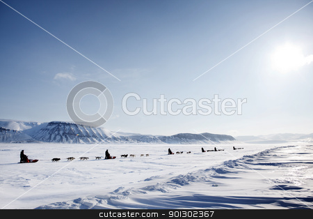 Dog Sled Expedition stock photo, A dog sled expedition across a barren winter landscape by Tyler Olson