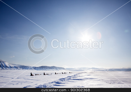 Dog Sled Expedition stock photo, A number of dogsleds on a barren winter landscape by Tyler Olson