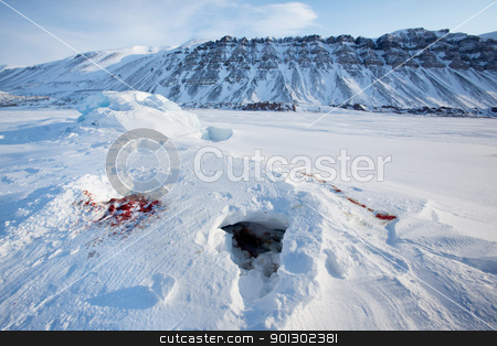 Seal Remains stock photo, Bloody remains of a seal after it had been captured and eaten by a polar bear by Tyler Olson