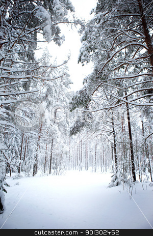Winter Forest stock photo, A romantic winter forest with lots of snow by Tyler Olson