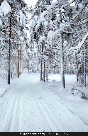 Ski Trail stock photo, A winter ski trail through a forest by Tyler Olson