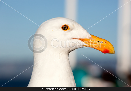 Seagull Head stock photo, The head of a healthy seagul by Tyler Olson