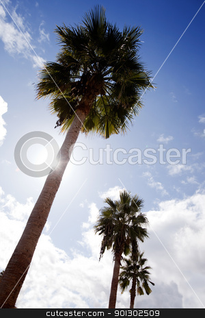 Palm Tree Paradise stock photo, A row of palm trees against the sun by Tyler Olson