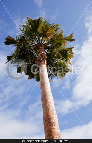 Palm Tree stock photo, A palm tree detail against the blue sky by Tyler Olson