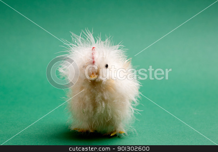 Baby Chicken stock photo, A little yellow chick easter decoration isolated on green by Tyler Olson