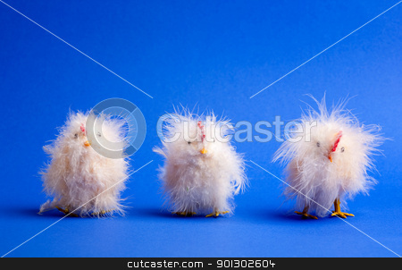 Little Chick stock photo, Three small chicks isolated on blue by Tyler Olson