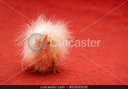 Funny Chicken stock photo, A funny little toy chicken isolated on red by Tyler Olson