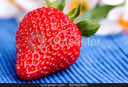 Fresh Strawberry stock photo, A strawberry on a blue table cloth in an outdoor setting by Tyler Olson