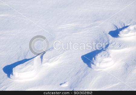 Polar Bear Track stock photo, A polar bear track in the snow by Tyler Olson