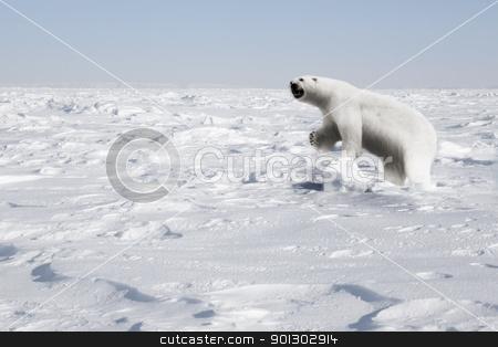 Polar Bear stock photo, A polar bear in a natural landscape - Svalbard, Norway by Tyler Olson