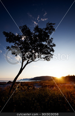 Tree Silhouette Coast stock photo, A tree silhouette against a sunset and ocean background by Tyler Olson