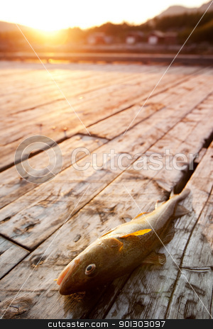 Fish stock photo, A fresh fish on a wooden dock in northern Norway by Tyler Olson