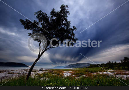 Tree Silhouette stock photo, A lone tree on a Norwegian costal landscape by Tyler Olson
