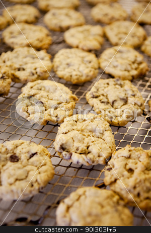 Fresh Chocolate Chip Cookies stock photo, Freshly backed chocolate chip cookies - shallow depth of field by Tyler Olson