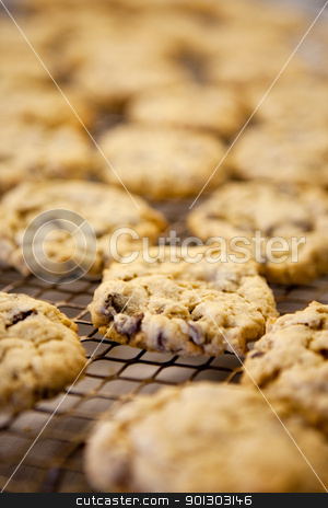 Fresh Cookies stock photo, Freshly backed chocolate chip cookies - shallow depth of field by Tyler Olson