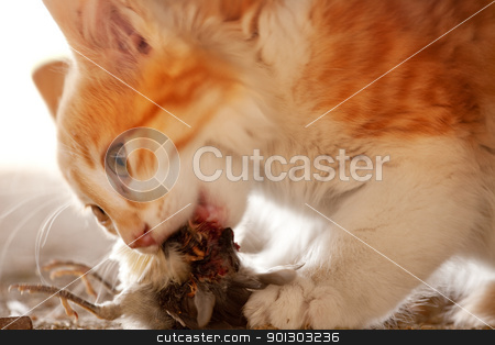 Cat Eating Bird stock photo, A cat eating a bird it has caught - motion blur on cat's head by Tyler Olson
