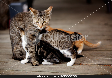 Nursing Kitten stock photo, A cat with many nursing kittens by Tyler Olson