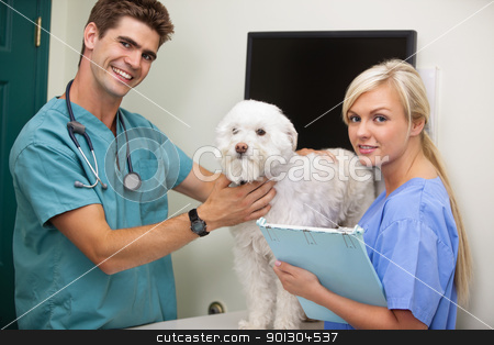 Vet with assistant examining dog stock photo, Portrait of vet with assistant examine dog by Tyler Olson