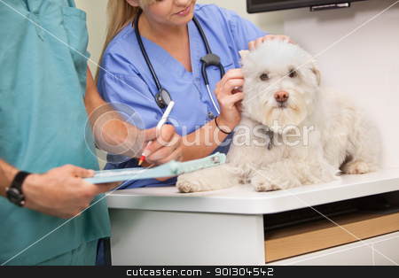 Vet and assistant examining dog stock photo, Mid section of veterinarian and assistant examining dog by Tyler Olson